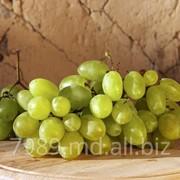 Столовые сорта винограда в Молдове фото