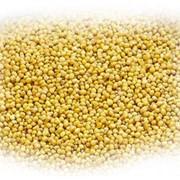 Горчица белая, желтая, сарептская фото