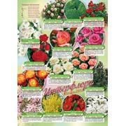 Луковицы цветов каталог Осень 2012 артикул 01-002 фото