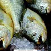 Рыбопереработка Рыбный промысел Каховское водохранилище , р. Днепр фото