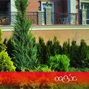 Композиции из декоративных растений фото