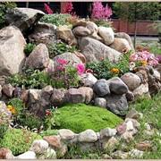 Рокарий (закладка и посадка растений) фото