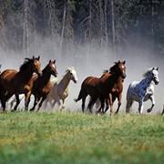 Лошади на продажу фото