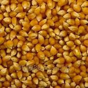 Кукуруза Экспорт от 1000тн. Документы. Качество фото