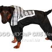 Комбинезон для собаки Тамплиер фото
