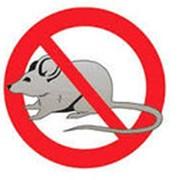 Обработка от мышей фото