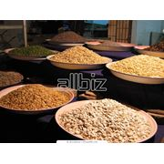 Зерновые культуры различные. фото