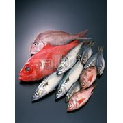 Рыба морская в широком ассортименте фото