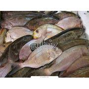 Рыба свежемороженая различных видов фото