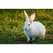 Поставка крольчатины из Вильнюса фото