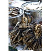 Рыбные продукты в ассортименте фото