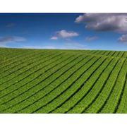 Выращивание сельскохозяйственных культур фото