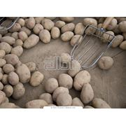 Обработка сельскохозяйственной продукции фото