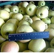 Предлагаем оптом яблоки зимние с Винницы фото