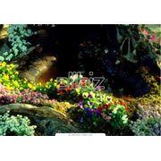 Высадка садовых цветов фото