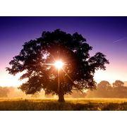 Биозащита деревянных элементов фото