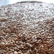 Лен масличный оптом фото