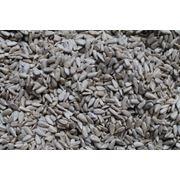 Качественная очистка семян подсолнечника фото