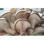 Переработка и реализация грибов в Молдове и на экспорт фото