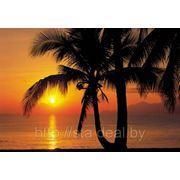 Komar Palmy Beach Sunrise фото