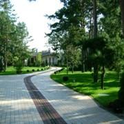 Озеленение, ландшафтный дизайн фото