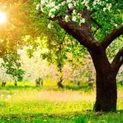 Уход за деревьями фото