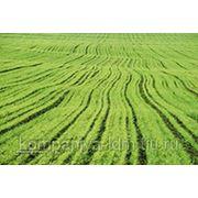 Микроудобрения для зерновых озимых и тепличных культур фото
