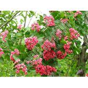 посадка деревьев кустов цветов лиан хвойных газонов