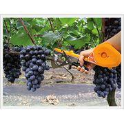 Инструмент для подвязки виноградника фото