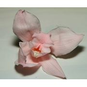 Орхидеи декоративные стабилизированные фото