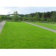 Рулонный газон в Кишиневе фото