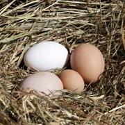 Яйцо куриное Organic eggs фото