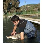 Фермерское рыбное хозяйство в Испании фото