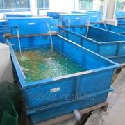 Производство емкостей для рыборазводения фото