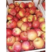Яблоко айдаред 65+ оптом от производителя фото