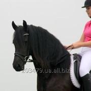 Фризская лошадь 3-4 года Грета 164 см фото