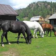 Конные туры фото