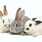 Комбикорма для кроликов фото