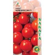Семена томатов SAKATA фото