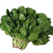 Семена шпината фото