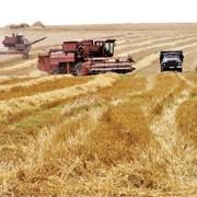 Уборка зерновых комбайнами Дон 1500Б фото