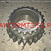 Шестерня МТЗ-1221 КПП вала первичного Z=21/20 РУП МТЗ фото