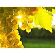 Фруктово-ягодные ароматизаторы Виноград фото