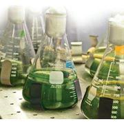 Сырье для биотоплива. фото