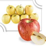 Яблочный концентрат фото