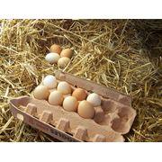 Яйцо куриное - деревенское фото