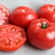 Семена томатов F1 Булава фото
