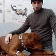 Ветеринарные услуги: диагностика, терапия, хирургия г.Киев фото
