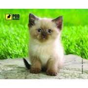 Коврик Pod Mishkou Сиамский котик фото