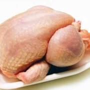 Мясо птицы куриное продам в Украине фото